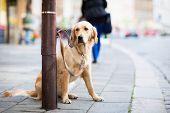 Постер, плакат: Симпатичные собаки терпеливо ждет своего хозяина на улице города