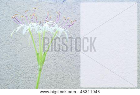 Thai lily