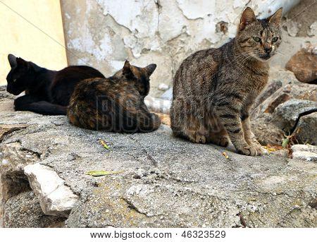 Cats at Naxos island