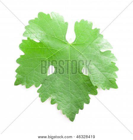 Grape leaf.