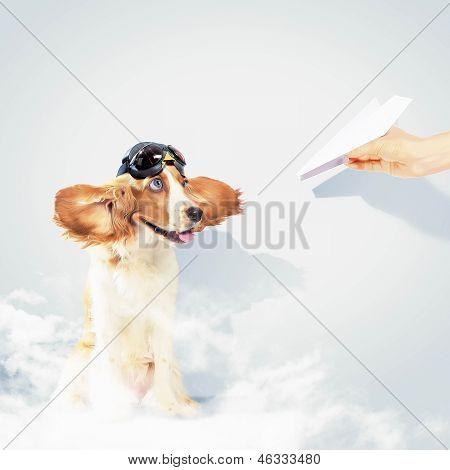 Funny spaniel dog