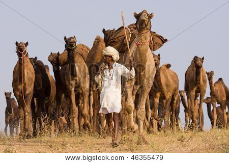 Pushkar Fair ( Pushkar Camel Mela ) Rajasthan, India