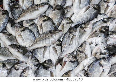 Frischfisch Goldbrasse Bream