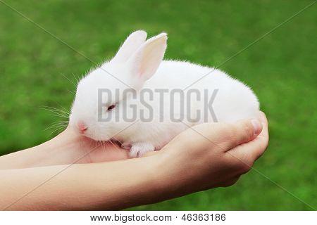 Beauty Rabbit