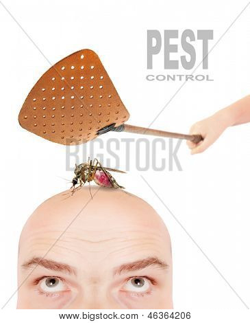 Smashing flyswatter over a sucking mosquito on a men's head. Ecological pest control. Funny picture with space for your text.
