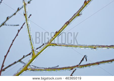 Ice on the peach tree branch.