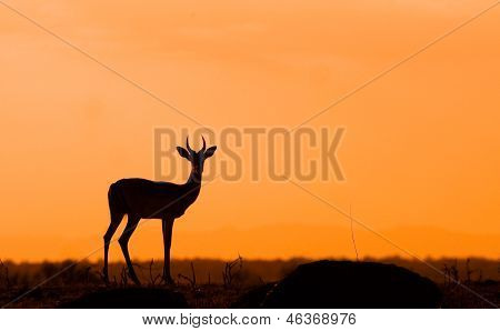 African sunset with deer silhouette