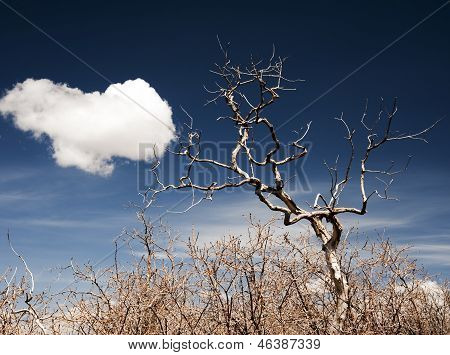 Lone Tree and Cloud