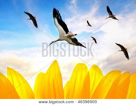 Stork Conceptual Background