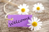 stock photo of salute  - a purple banner with welcome on it and flowers in the background - JPG