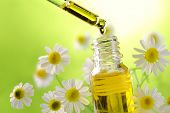 picture of chamomile  - Drop falling from dropper of essential oil - JPG