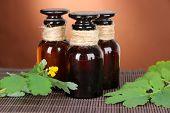 foto of celandine  - Blooming Celandine with medicine bottles on table on brown background - JPG
