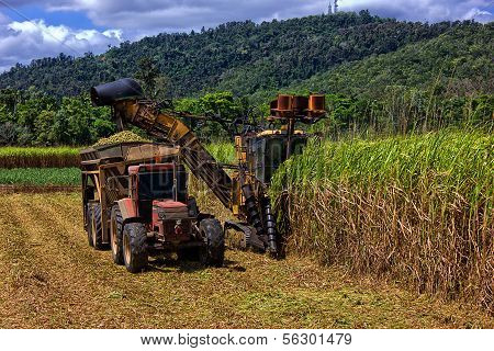 Sugar Cane being harvested near Proserpine, Queensland