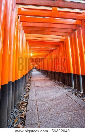 Thousands of vermilion torii gates at Fushimi Inari Taisha Shrine in Kyoto, Japan