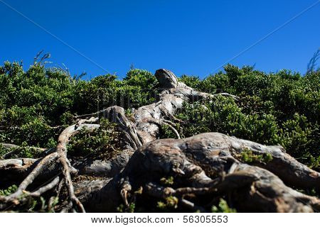 Blue sky Scenic Landscape Appalachian Mountains