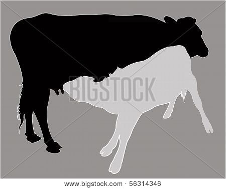 Calf suckling milk, silhouette vector
