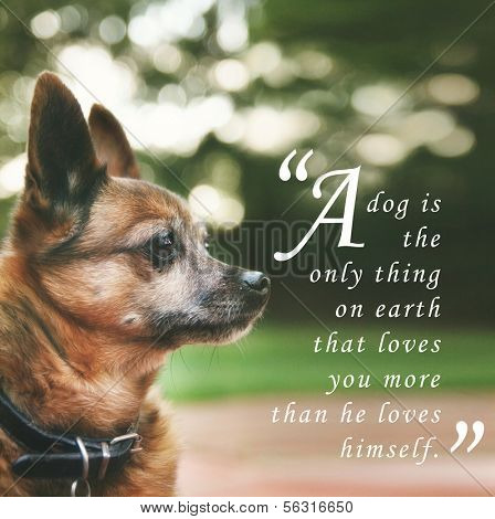 a handsome chihuahua mix senior dog with dark muted tones and a quote: