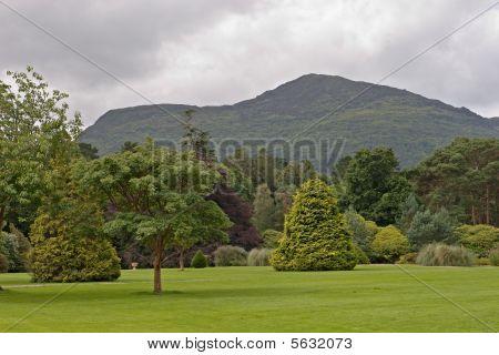 Scenery Near Muckross House