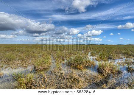 Paisagem Florida Everglades