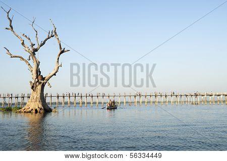 U Bein Bridge, with dead tree in foreground.