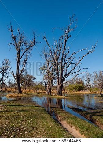 Ford In Paradise Pools Area In Okavango Delta