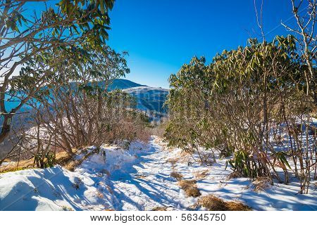 Snowy Roan Mountain