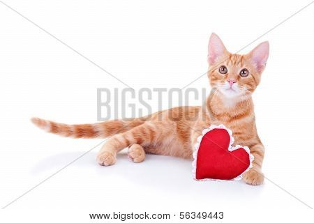 Valentine's Day cat with red heart isolated on white. Valentine pet kitten.