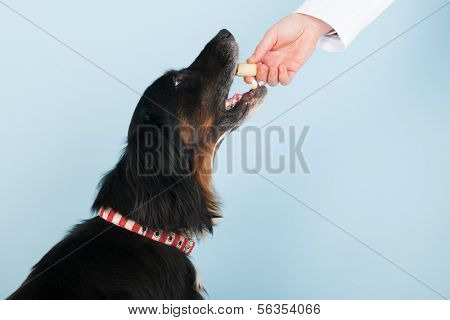 Vet is giving a reward to the brave dog