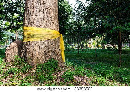 Community Forest Ordination