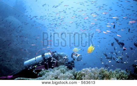Beqa Fish Storm