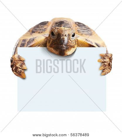 Cute turtle holding  a blank white board