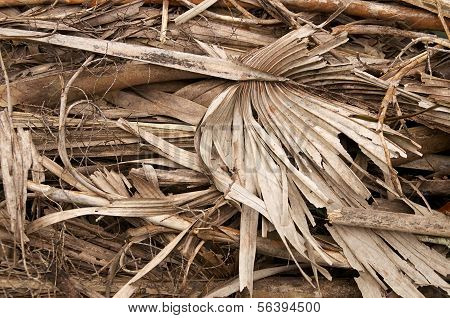 Large Stack Of Dried Fronds And Twigs