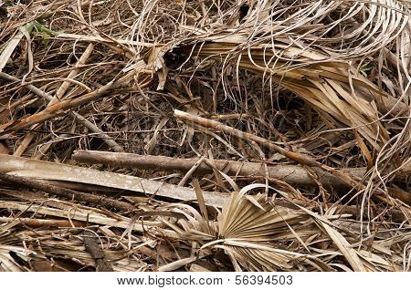 Large Stack Of Dried Leaves And Twigs
