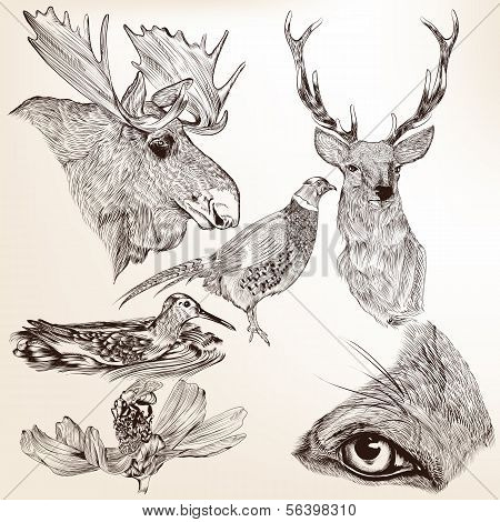 Collection Of Vector Hand Drawn Animals For Design