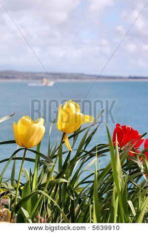 Tulips against the ocean