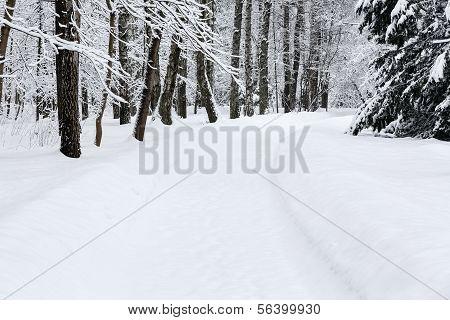 Winter-Pfad