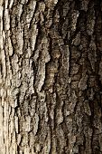 tree trunk closeup background wallpaper