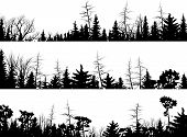 stock photo of coniferous forest  - Set of vector horizontal silhouettes coniferous treetops forest  - JPG