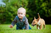 stock photo of bulls  - small boy playing with a bull terrier puppy