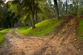 pic of tall grass  - Some dirt paths with grass through the woods - JPG