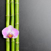 Pink orchid and bamboo grove on the black background