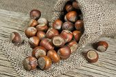 stock photo of hazelnut tree  - Hazelnuts on a wooden and jute background - JPG