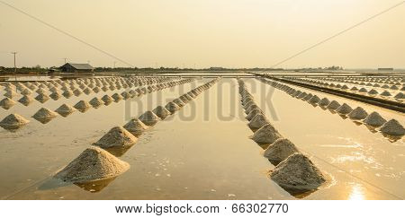 Sea Salt Field At Sunset