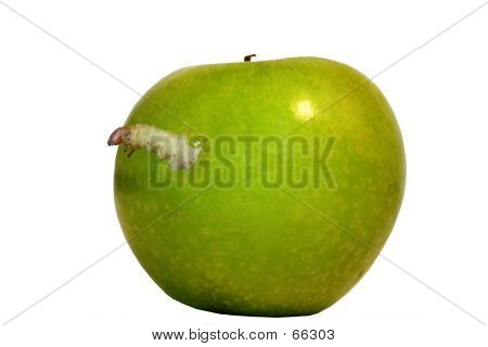 Ugly Worm In An Apple
