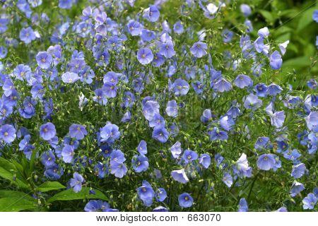Field Flowers - 1