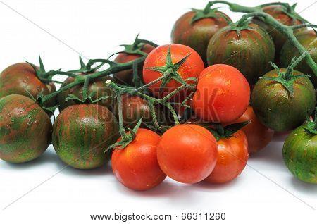 Tomatoe 5