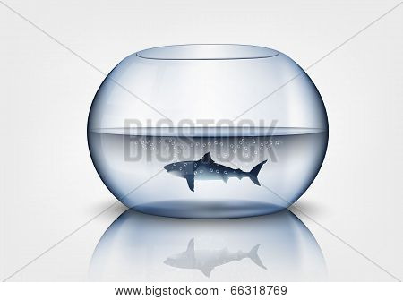 aquarium with shark