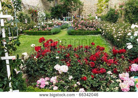 Eltville am Rhein, Rose Garden in the Electoral Castle Eltville am Rhein from the 14th century, Germ