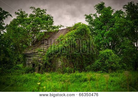 Old, Abandoned, Derelict, Ivy Covered Cabin