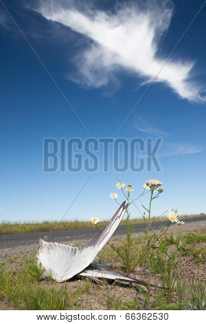 Dead bird wings and flowers side of the road